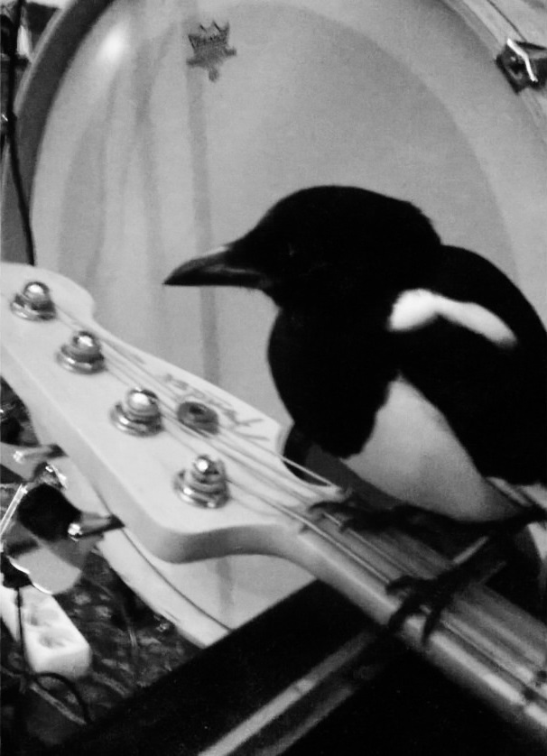 Bird playing bass in Yurodivy
